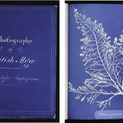 Anna Atkins, Photogram