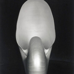 Edward Weston, Nautilus, 1927