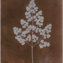 William Henry Fox Talbot, Photogram