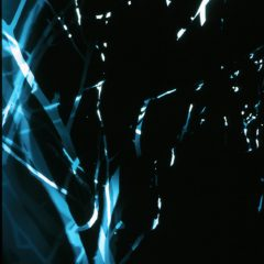 Branches 3, Backlit photogram on photographic film, Aric Attas