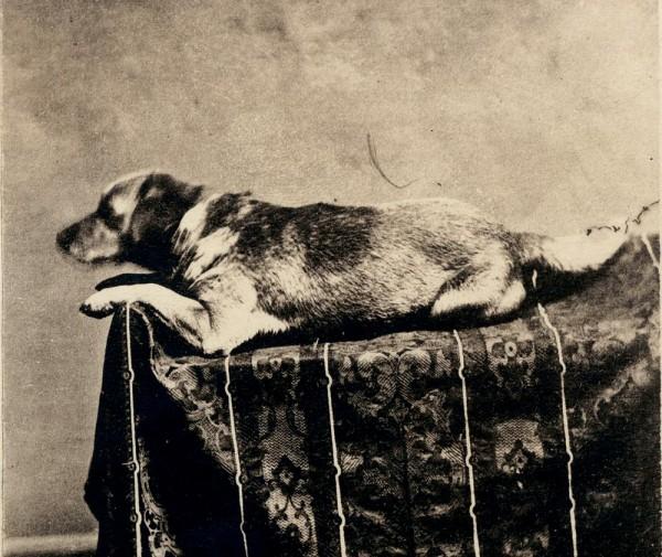 F.W. Ingmire, Fido, 1860