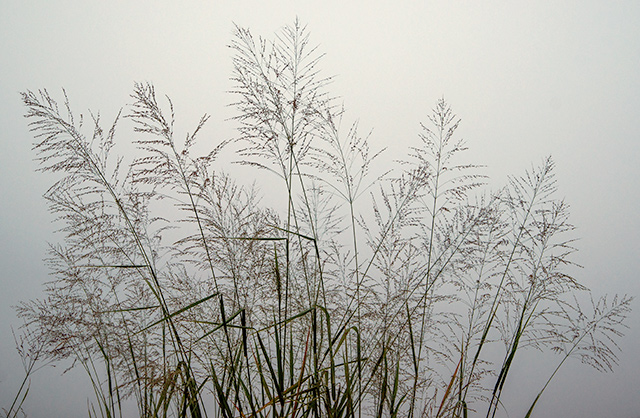 Bob Webster, Foggy Morning, Color Photograph, 2013
