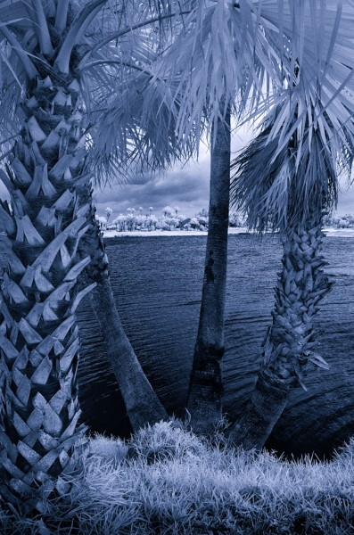 Paul Simon, Untitled, Digital Infrared Photograph, 2014