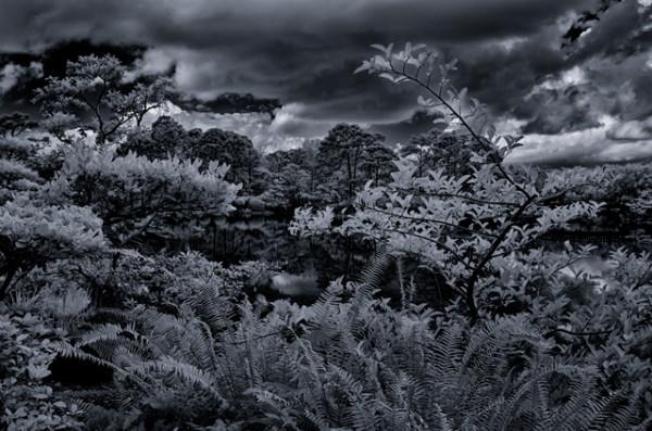 Paul Simon, Morikami Gardens, Delray Beach, Florida, 2014